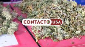 Projeto de lei para legalização da Marijuana em New Jersey